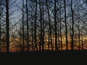 Sunset Blazes Behind Silhouetted Denuded Trees by Raul Touzon