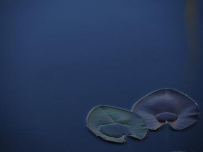 Water Lily Pads Floating in Dark Blue Water by Raul Touzon