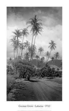 Coconut Grove, Lahaina, 1910 by Ray Jerome Baker