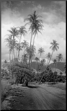 Coconut Grove, Lahaina, 1910 by Ray Jerome Baker