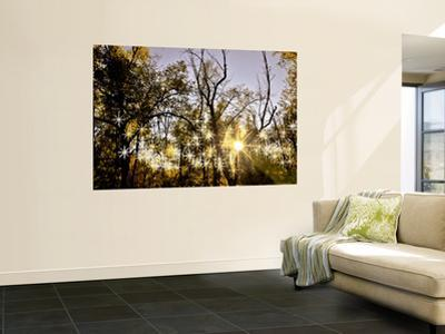 Sunlight Through Trees by Ray Laskowitz