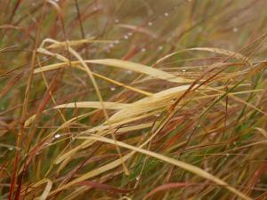 A Close View of Raindrops on the Meadow Grass by Raymond Gehman