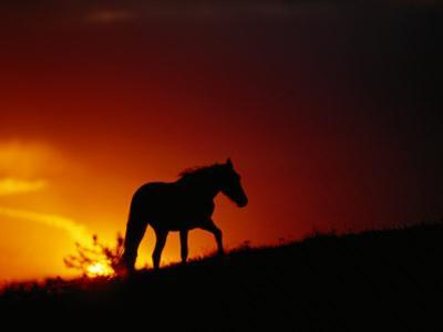 A View of a Wild Horse Silhouetted by the Setting Sun by Raymond Gehman