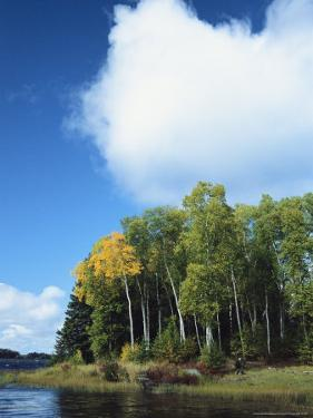 Cloud Rises Above Birch Trees on the Shore of a Manitoba Lake by Raymond Gehman