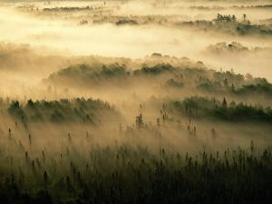 Early Morning Sunlight Beams Through the Fog That Shrouds the Boundary Waters by Raymond Gehman