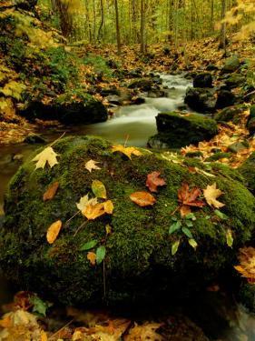 Fallen Leaves on Rocks Next to a Mountain Stream by Raymond Gehman