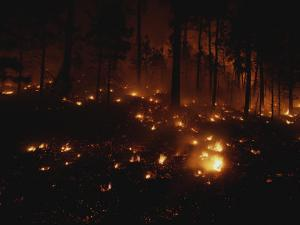 Fires Dot the Ponderosa Pine Forest on the Mescalero Indian Reservation by Raymond Gehman
