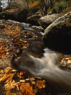 Fox Creek and Autumn Leaves in the Jefferson National Forest by Raymond Gehman