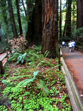 Hikers on a Trail in Muir Woods National Monument, California by Raymond Gehman