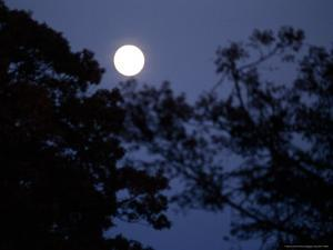 Moon Rise Framed By Silhouetted Trees in the Evening by Raymond Gehman