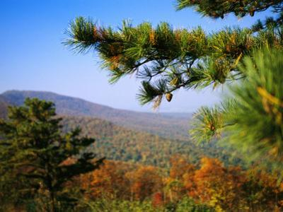 Pine Tree and Forested Ridges of the Blue Ridge Mountains by Raymond Gehman