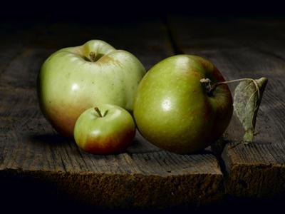 A Roxbury Russet, a Tiny Lady Apple and a Calville Blanc D'Hiver by Rebecca Hale