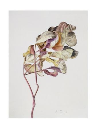 November Peony Leaves, 1999 by Rebecca John