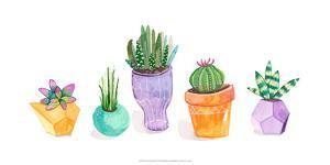 Succulent Display II by Rebekah Ewer