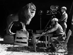 Recording of the lion roar for the introduction of MGM films, c. 1920- 1930