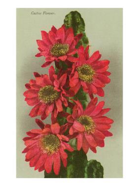 Red Cactus Flowers