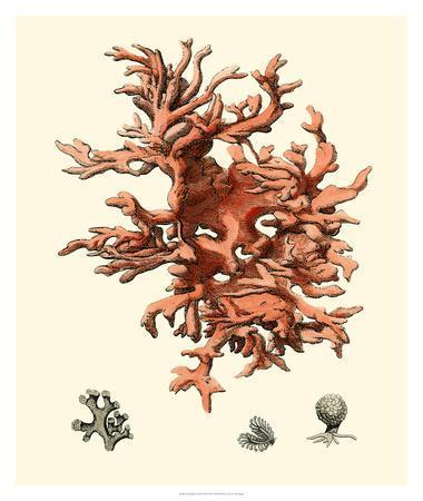 https://imgc.allpostersimages.com/img/posters/red-coral-iii_u-L-F7MK2H0.jpg?artPerspective=n