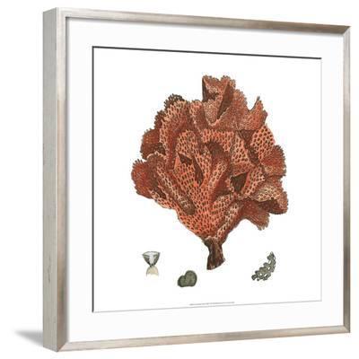 Red Coral IV--Framed Giclee Print