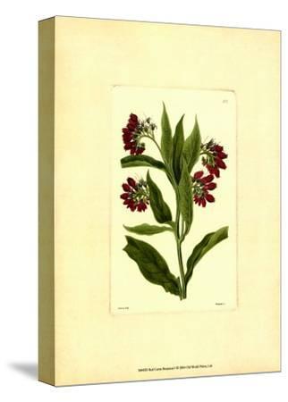 Red Curtis Botanical I