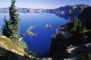 Red Elderberry (Sambucus Racemosa) with Phantom Ship Island in Crater Lake
