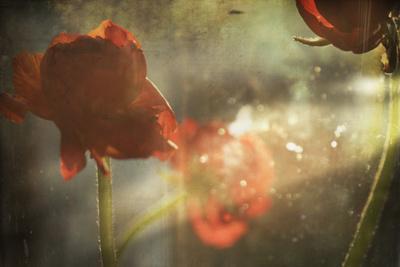 https://imgc.allpostersimages.com/img/posters/red-flower_u-L-PZ0F540.jpg?p=0