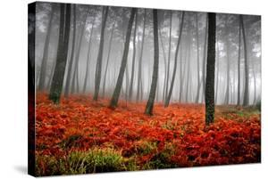 Red Flowers in a Foggy Forest