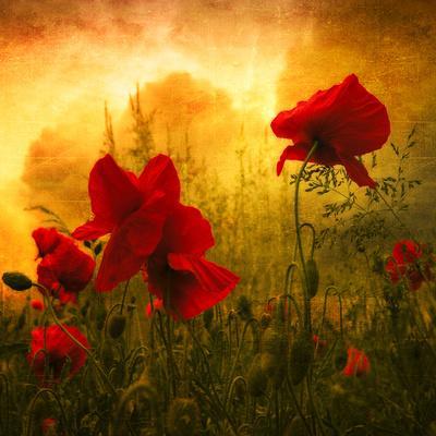 https://imgc.allpostersimages.com/img/posters/red-for-love_u-L-PHFC130.jpg?p=0