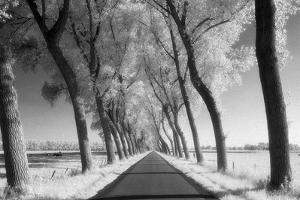 A Tree Lined Road Through Farmland in Damme Belgium Shot by Red Square Photography