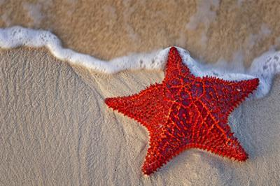 Red Starfish on Thebeach