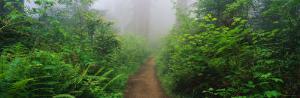 Redwood National Park, California, USA