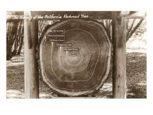 Redwood Section with Dates