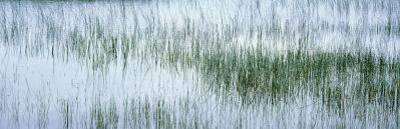 Reed Filled Pond, Isle of Mull, Scotland, United Kingdom
