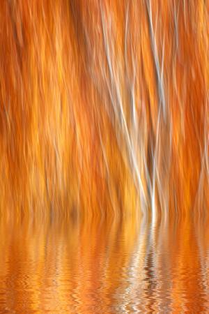 https://imgc.allpostersimages.com/img/posters/reflection-of-autumn-colored-aspen-trees-grant-lake-california-usa_u-L-PN708G0.jpg?p=0