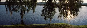 Reflection of Tree in a River, Middleton Place, Charleston, Charleston County, South Carolina, USA