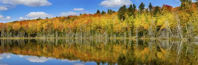 Reflection of Trees in a Lake, Pete's Lake, Schoolcraft County, Upper Peninsula, Michigan, USA