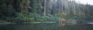Reflection of Trees in a River, Smith River, Jedediah Smith Redwoods State Park, California, USA