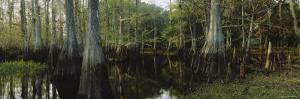 Reflection of Trees in Water, Fisheating Creek, Everglades, Palmdale, Florida, USA
