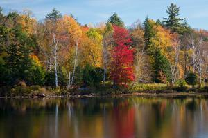 Reflection of trees on water, Adirondack Mountains State Park, New York State, USA