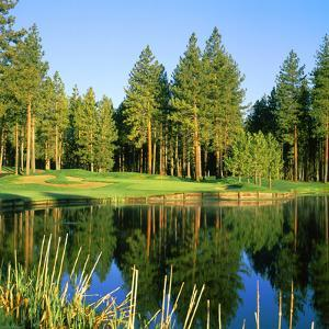 Reflection of Trees on Water, Edgewood Tahoe Golf Course, Stateline, Douglas County, Nevada, USA