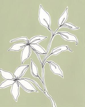 Botanic Drawing I by Regina Moore
