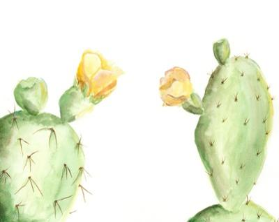 Spiny Desert Plants I by Regina Moore