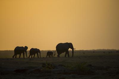 Kenya, Kajiado County, Amboseli National Park, African Elephant by Reiner Harscher