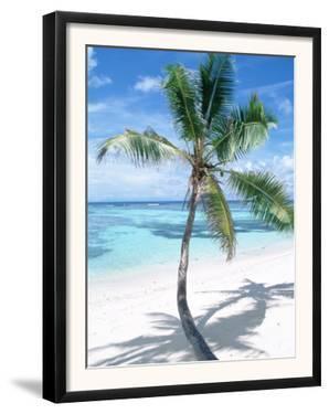 Beach with Coconut Palm (Cocos Nucifera) La Digue, Seychelles by Reinhard