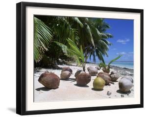 Coconut Palm Seedlings (Cocos Nucifera) on Tropical Beach, Seychelles by Reinhard