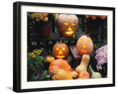 Different Kinds of Pumpkin and Pumpkin Faces at Halloween (Cucurbita Sp.)