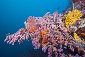 Corals in the Bug of the Japanese Wreck 2, Marovo Lagoon, the Solomon Islands by Reinhard Dirscherl