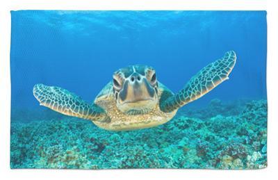 Green Turtle (Chelonia Mydas), Maui, Hawaii, USA by Reinhard Dirscherl