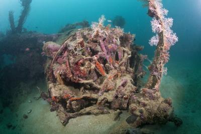 Radial Engine of the Dauntless Dive Powerful Striker Aircraft Wreck, Marovo Lagoon, the Solomon Isl by Reinhard Dirscherl