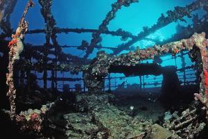 Scuba Diver Diving on Umbria Shipwreck, Sudan, Africa, Red Sea, Wingate Reef by Reinhard Dirscherl