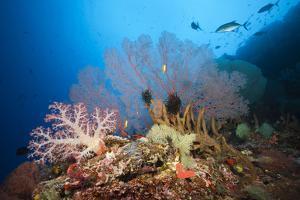 Very Varied Coral Reef, Russell Islands, the Solomon Islands by Reinhard Dirscherl